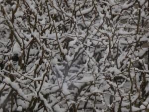 Schnee g 150124