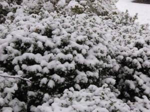 Schnee j 150124