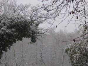 Schnee k 150124