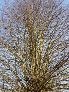 Baum 2 150213 x