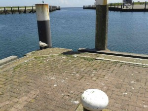 Meer Hafen Texel