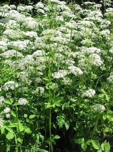 Namenlose Pflanze