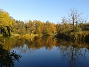 Herbsttag Ohligser Heide a 151023