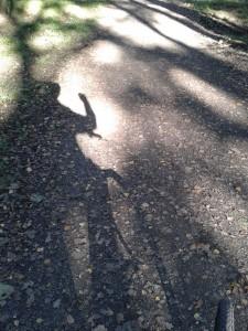 Ohligser Heide Fahrrad Schatten
