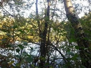 Ohligser Heide Weiher durch Blätter