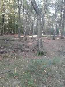 Ohligser Heide markierte Bäume
