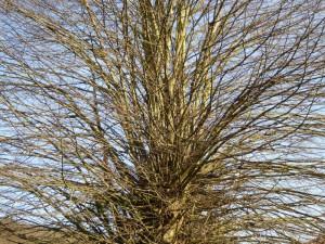 Baum 1 150213 x