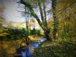Herbsttag Schwanenmühle 12 kl