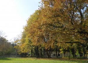Herbsttag Schwanenmühle 8 kl