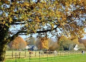 Herbsttag Schwanenmühle 9 kl