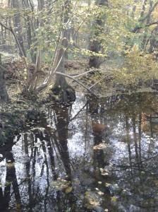 Herbsttag Schwanenmühle Bach JR