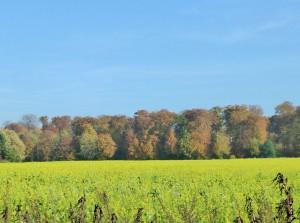 Herbsttag Schwanenmühle Senf Waldrand kl