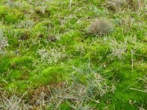 Langeoog Gras & Moos Dez 2015