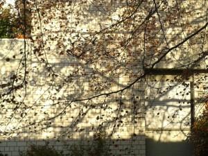 Nachbarhaus Morgensonne Buche 2 Mai 2016