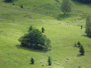 Hochschwarzwald d