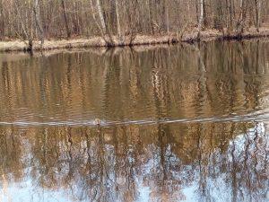 Drei-Insel-Teich e