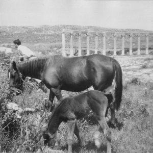 Syrien WüstenStation 1967