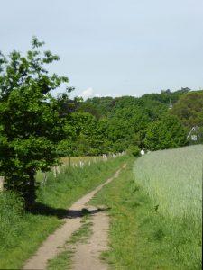 Mai Feldweg 170521