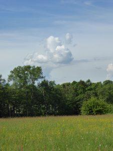 Mai Wiese Wolke 170521
