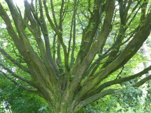 K Baum verzweigter kl
