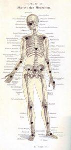 Skelett Schwerpunkte