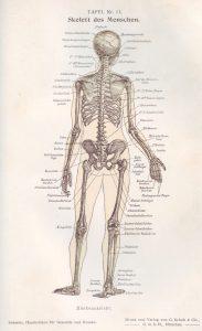 Skelett rück