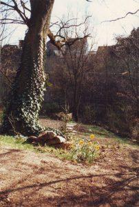 Eiche Doppelbild Frühjahr 1989 b