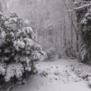 Eiche + Schnee 171210