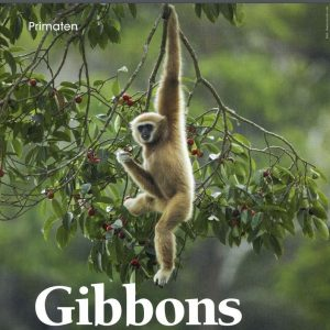GIBBONS A Screenshot 2018-01-30 10.19.13