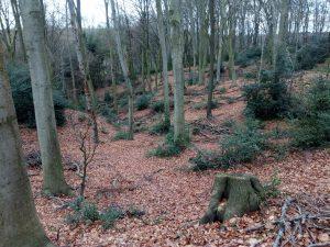 Wanderung Blick in Wald 190107
