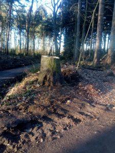 Ohligser Heide 180213 Stumpf & Holz a