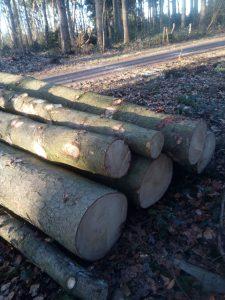 Ohligser Heide 180213 Stumpf & Holz d
