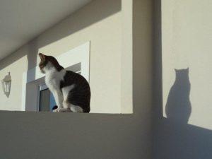 Katze in P Mos aufrecht Haas