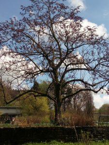 Botanisch Baum