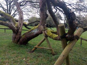 Botanisch Trompetenbaum