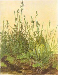 Dürer Rasenstück