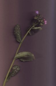 Pflanze bestimmen