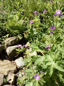 Garten Beet 180506